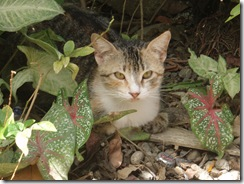 Anna's Kitten 3-21-2011 11-53-43 AM