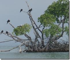 Birds in Tree 4-2-2011 7-46-09 AM