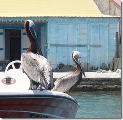 IDS Pelicans 6-8-2011 10-06-10 AM