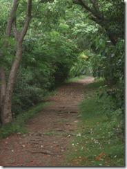 Stl Lucia path 6-28-2011 12-15-57 PM