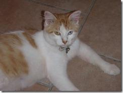 IDS Cat in Bakery 6-6-2011 7-23-51 AM 6-6-2011 7-23-51 AM
