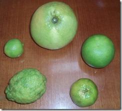 Citrus Fruits 10-29-2011 4-46-59 PM