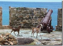 Castle Hike Goats and Gun 4-16-2012 11-46-40 AM