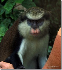 1-Cutty Trip Barbara Petting Monkey 6-27-2012 11-59-15 AM